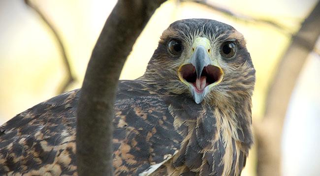 Curso introductorio teórico/práctico de fotografía de fauna, en Parque Mahuida